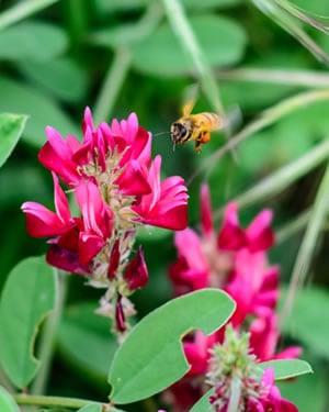 sulla pianta miele