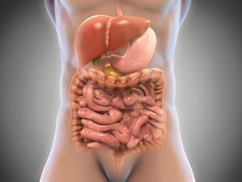 immagini del corpo umano fegato attivazione del metabolismo basale