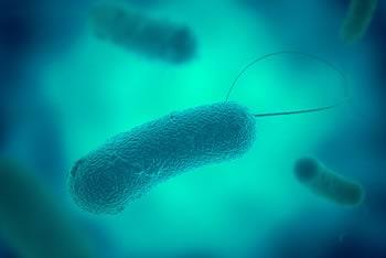 quali batteri si possono trovare nellacqua