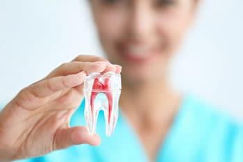Calendario Dentini.Caduta Dei Denti Da Latte
