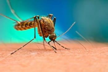 Virus Dengue: Cos'è? Contagio, Cura e Vaccino