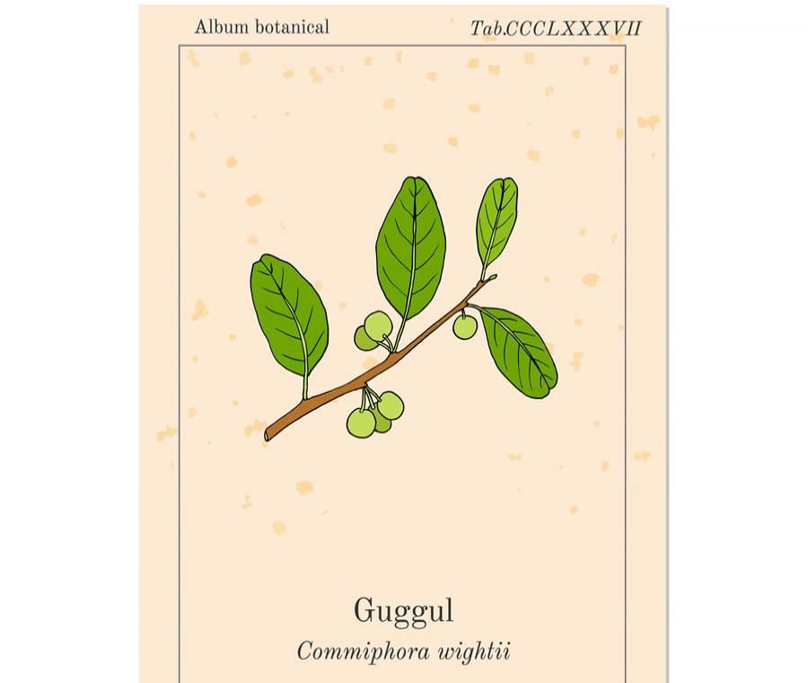 Commiphora mukul - Guggul: Che Cos'è? Proprietà, Usi e Rischi