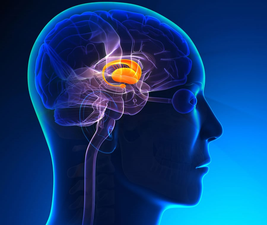 Talamo: Cos'è? Anatomia, Funzioni e Patologie
