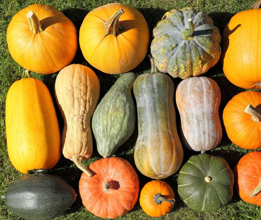 Zucca: proprietà benefiche e usi in cucina