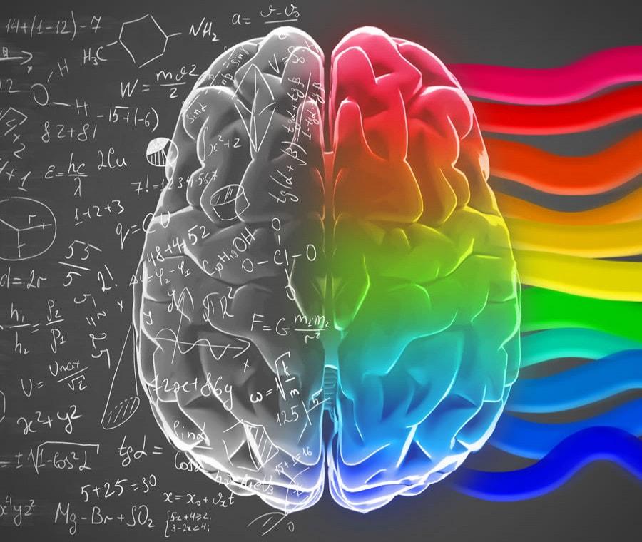 Emisferi Cerebrali: Cosa Sono? Anatomia e Funzioni