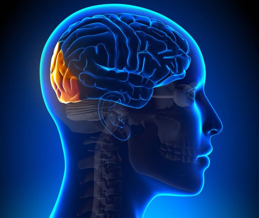 Lobo Occipitale: Cos'è? Anatomia, Funzione e Disfunzione