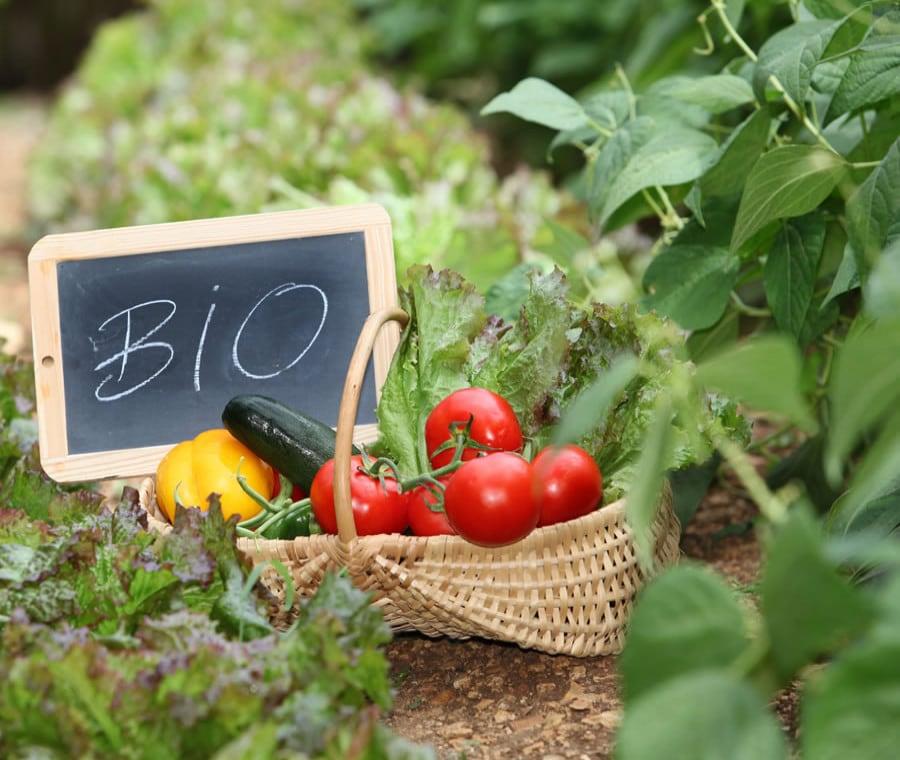 Alimenti e Prodotti Biologici: Cosa Sono e Quali Sono
