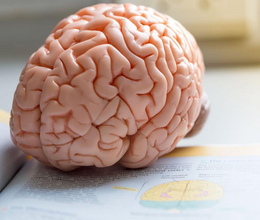 Corteccia Cerebrale: Cos'è? Anatomia e Funzione