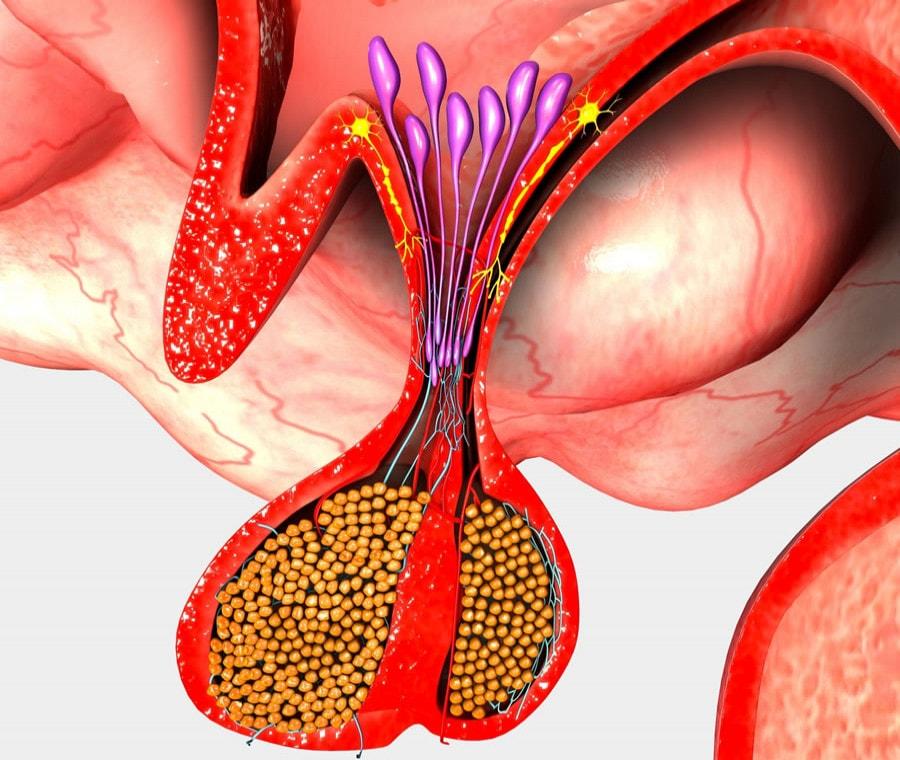 Neuroipofisi: Cos'è? Anatomia, Funzioni e Patologie