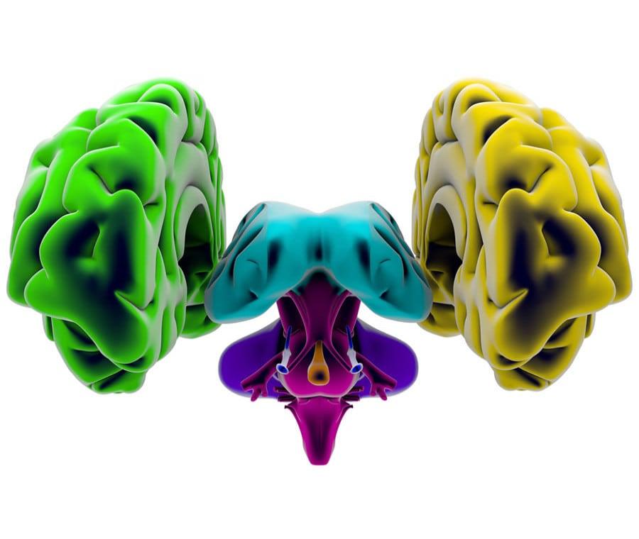Encefalo: Cos'è? Anatomia e Funzioni