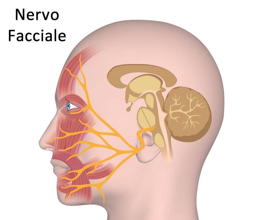 Nervo Facciale: Cos'è? Anatomia e Funzioni