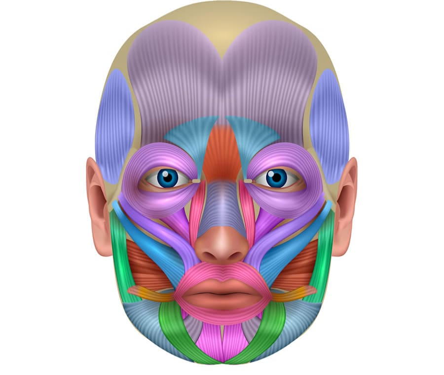 Muscoli Facciali: Quali sono? Anatomia e Funzioni