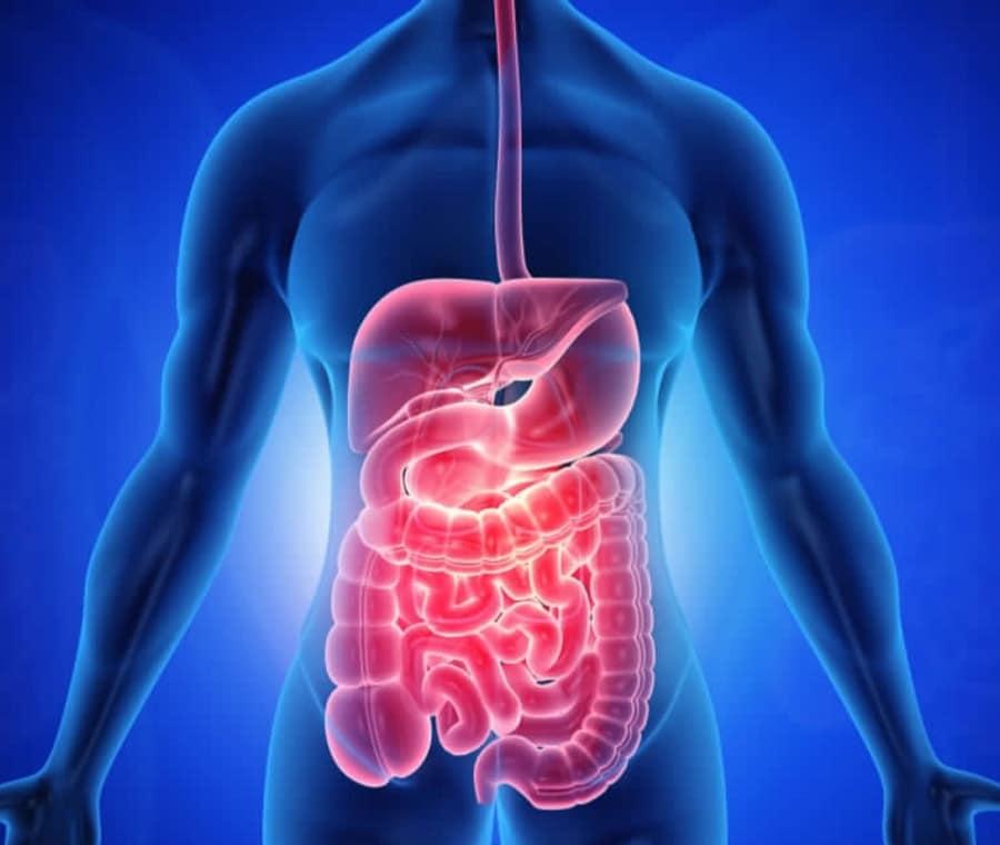 Digestione delle Proteine