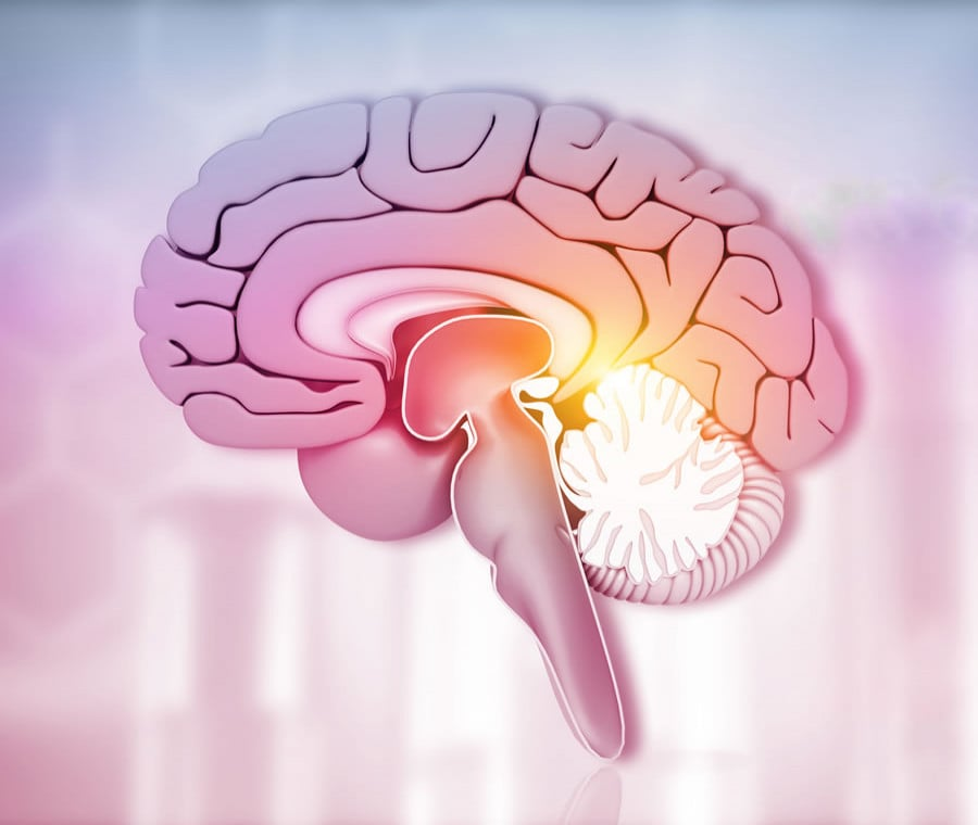 Mesencefalo: Cos'è? Anatomia e Funzioni