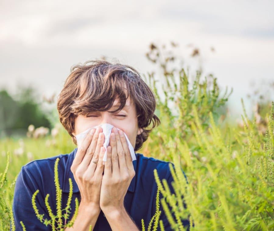 Allergia alle Graminacee