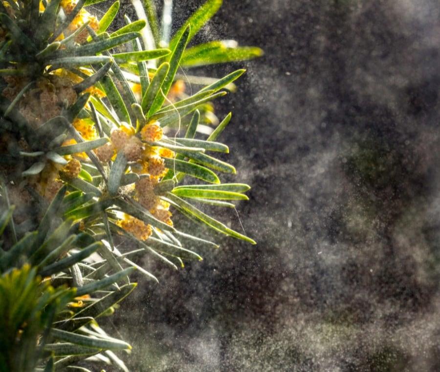 Allergia ai Pollini e Calendario delle Fioriture