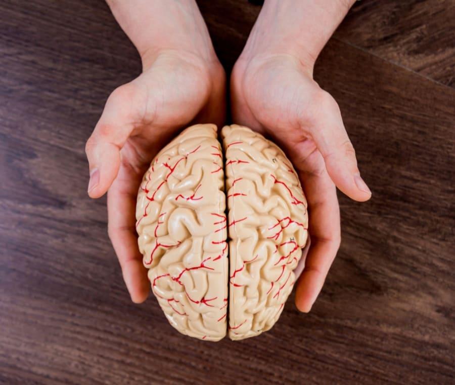 Gangli della Base, Funzioni dello striato e Neuropatologia del morbo di Huntington