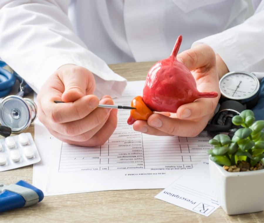 Prostata: Cos'è? Funzioni e Malattie