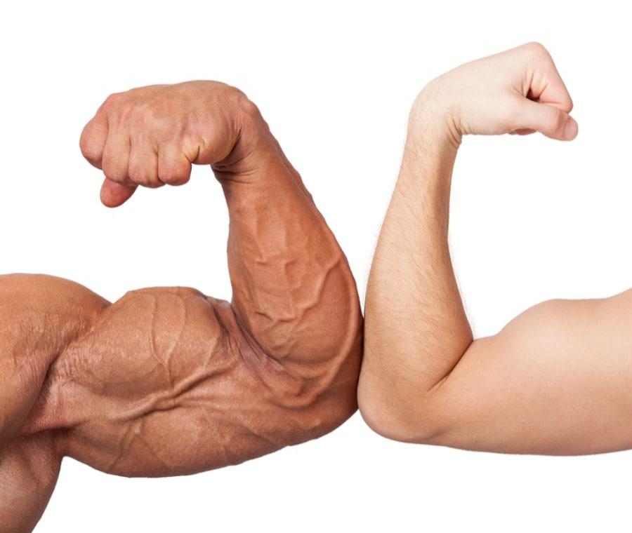 Braccia e Polpacci: Anatomia ed Esercizi