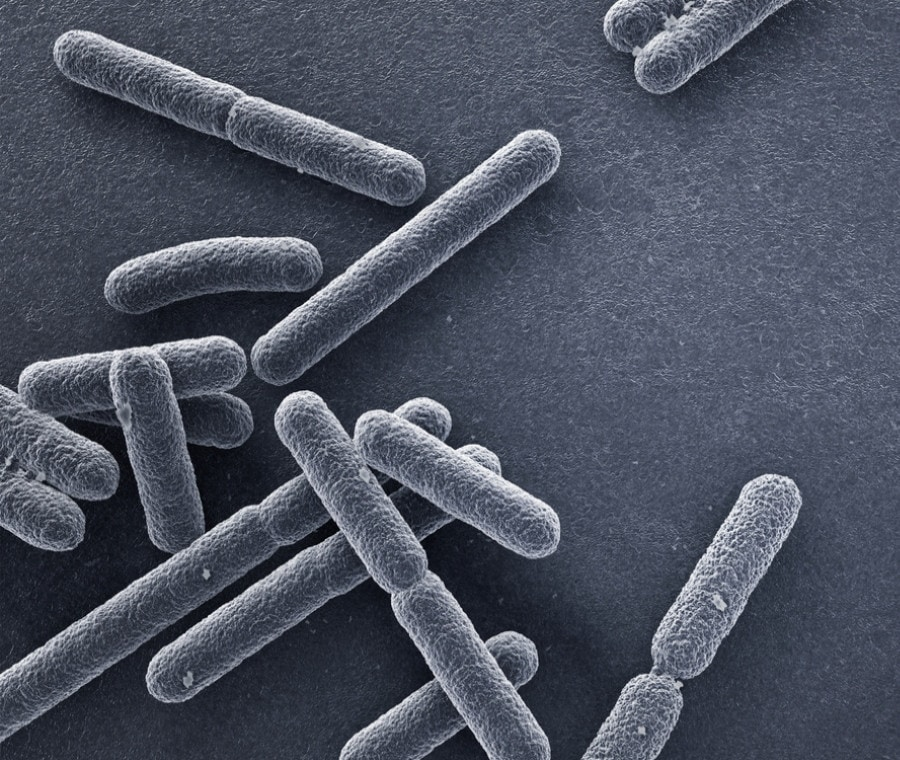 Escherichia coli: Biologia e Infezioni da Escherichia coli