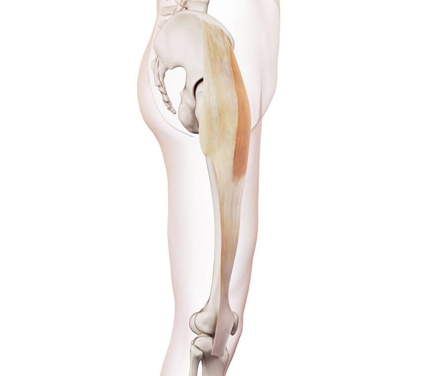 Bandelletta Ileotibiale: Anatomia, Funzione e Sindrome