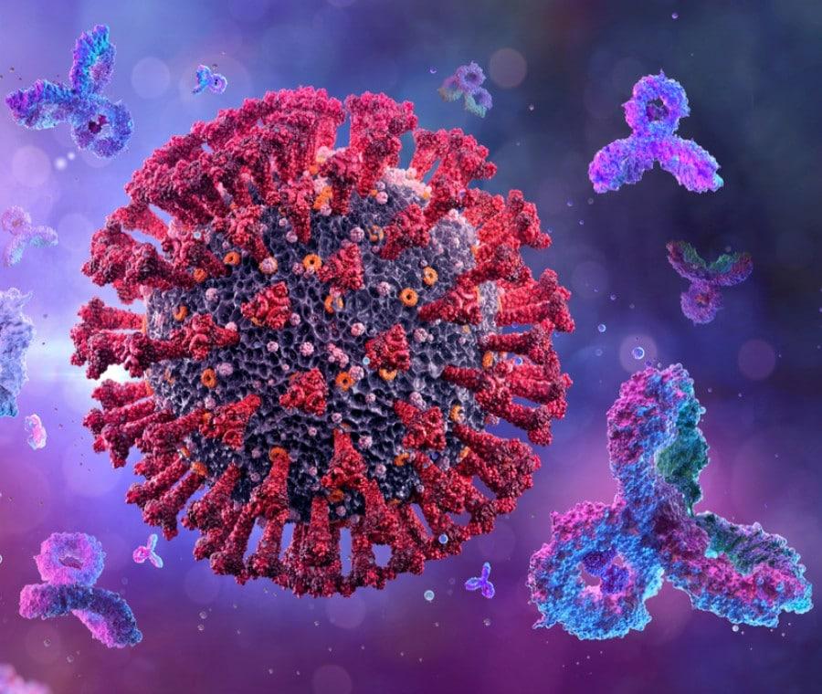 Anticorpi Monoclonali: Possibile Terapia per COVID-19?