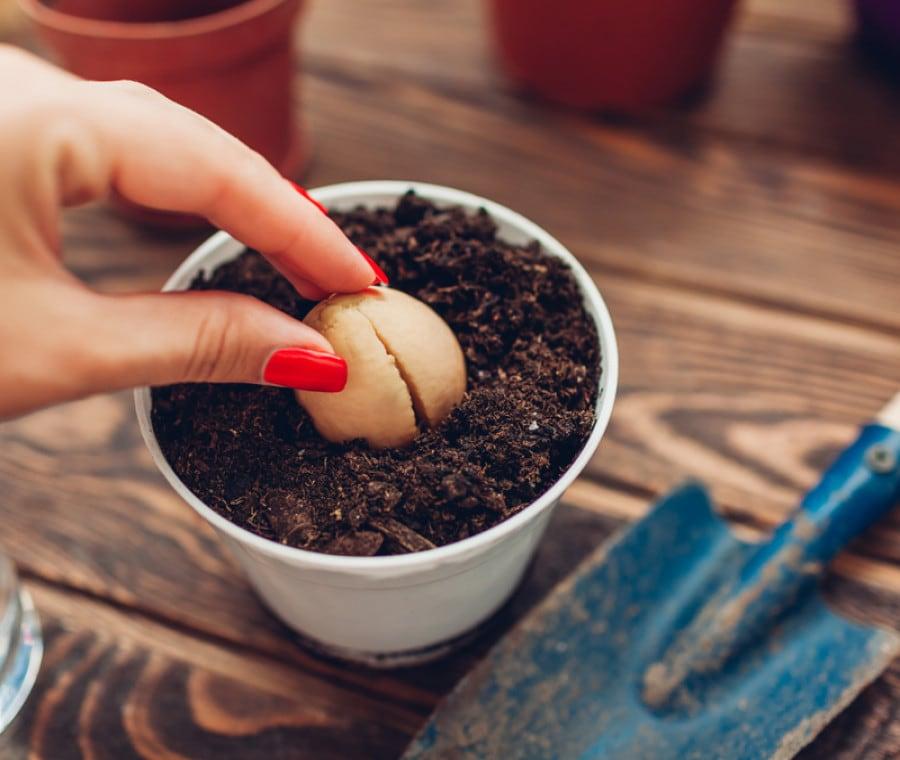 4 Frutti e Ortaggi da Coltivare in Casa facilmente: Come Fare