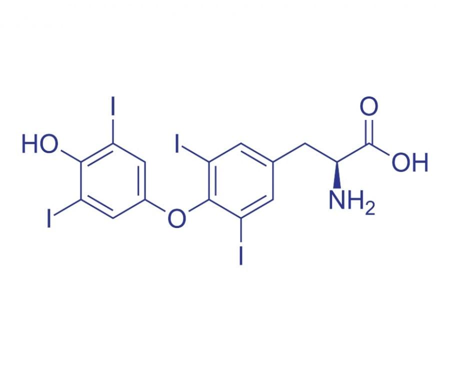 Levotiroxina: Cos'è, A Cosa Serve, Effetti Collaterali