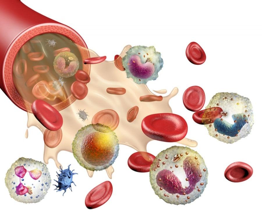 Leucociti o Globuli Bianchi: Cosa Sono, Valori e Funzioni