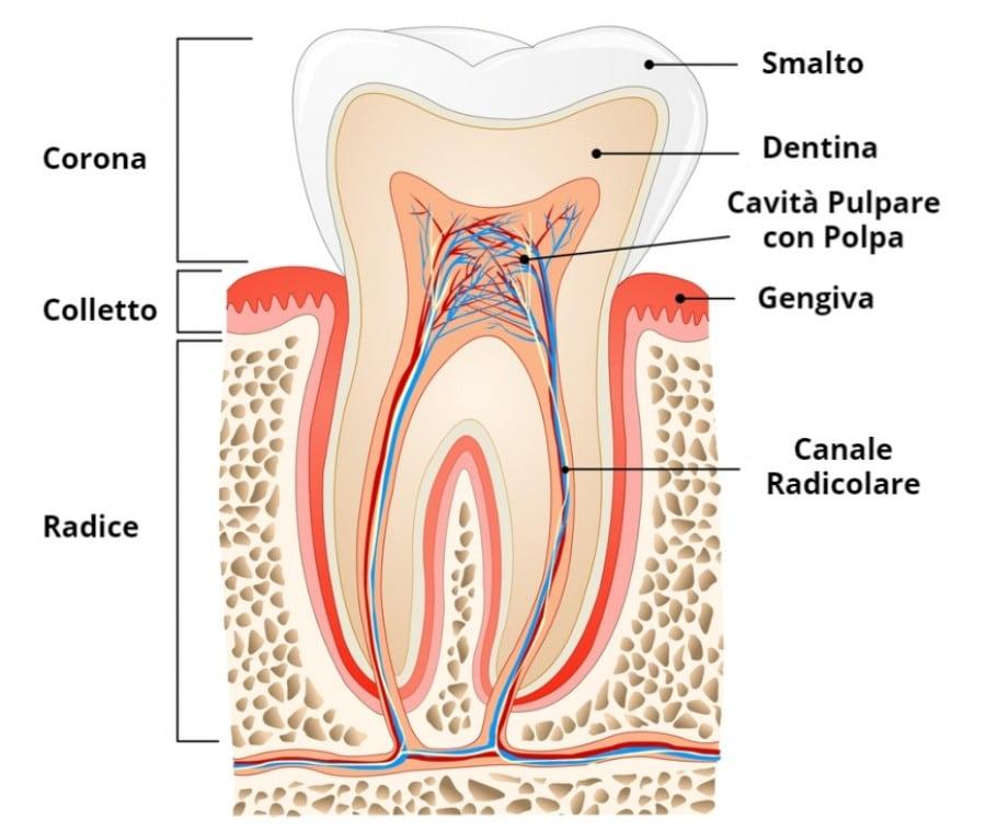 Denti: come sono fatti?
