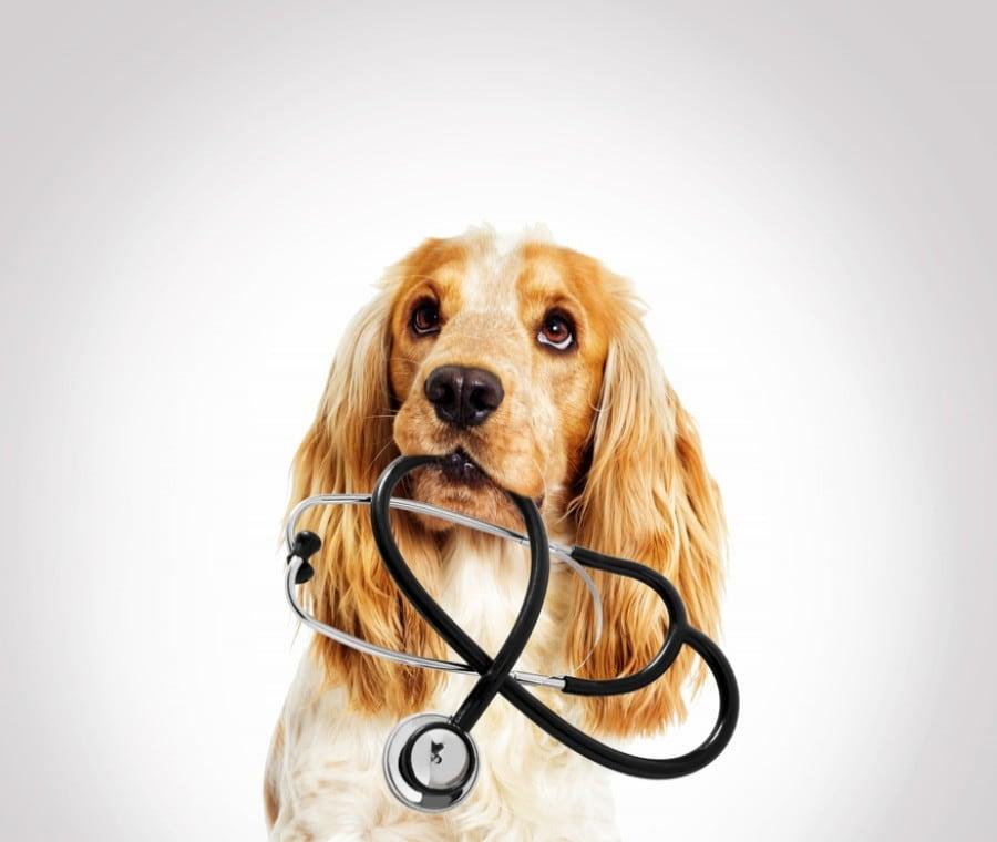 Leishmaniosi Canina: Cos'è, Cause e Sintomi