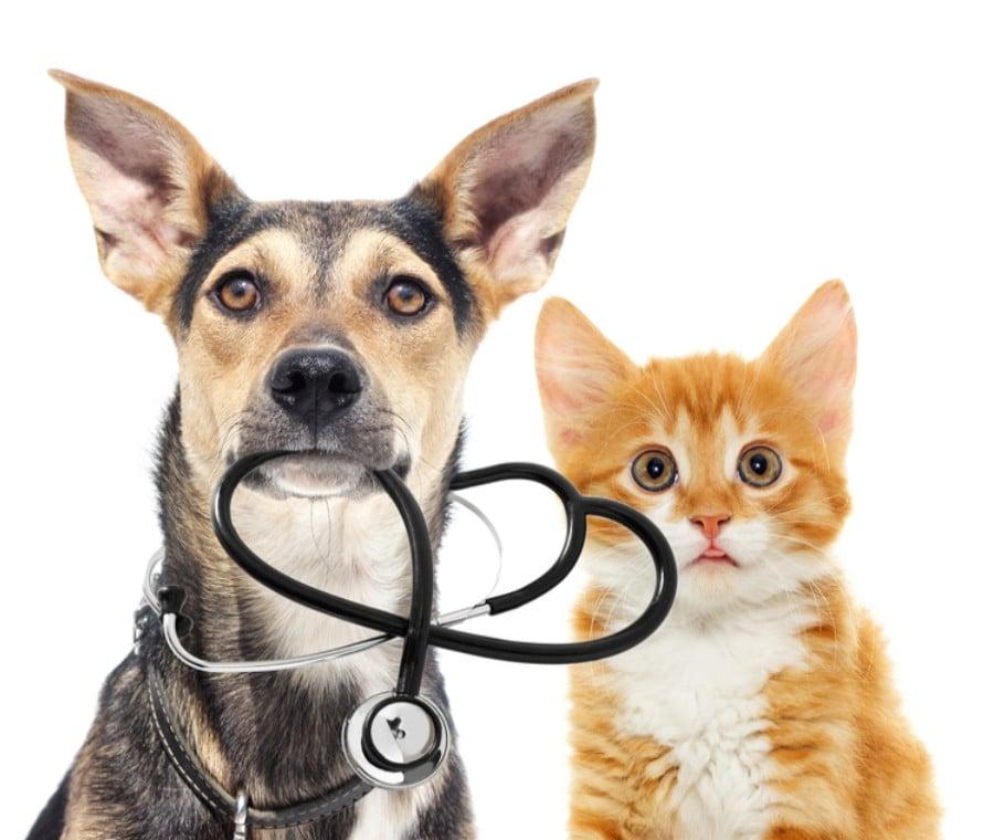 Diabete nel Cane e nel Gatto