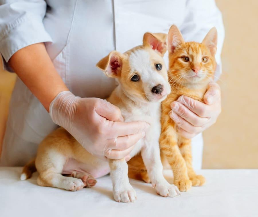 Selezione del Vaccino per Cani e Gatti