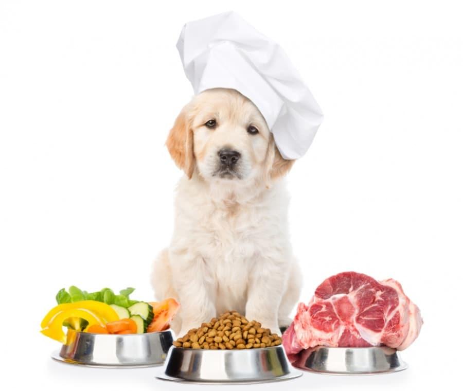 Alimentazione del Cane e del Cucciolo