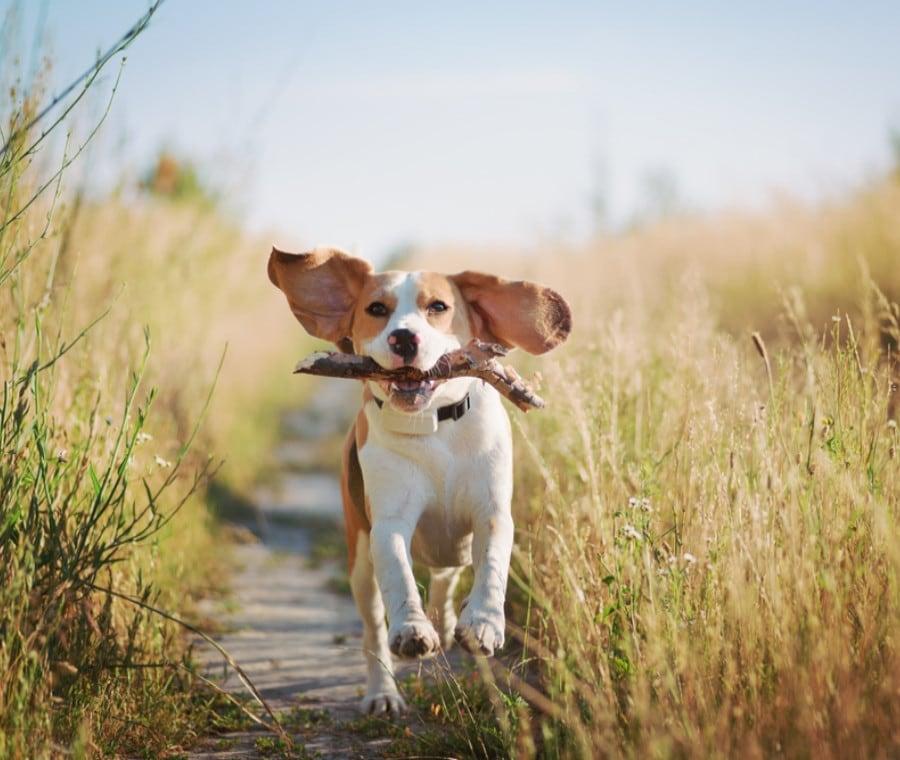Fabbisogni Energetici e Nutrizionali del Cane