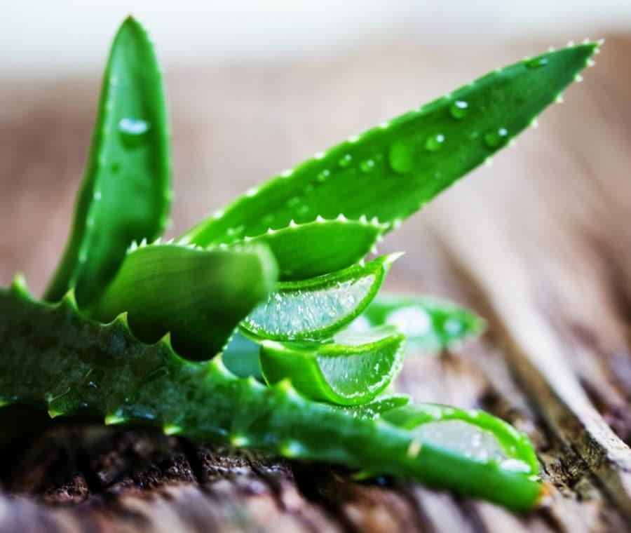 Aloe vera: Proprietà, Indicazioni e Usi