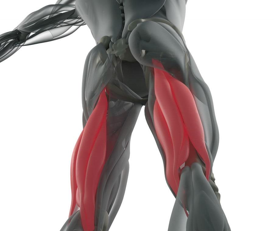 Muscoli Posteriori della Coscia - Ischiocrurali