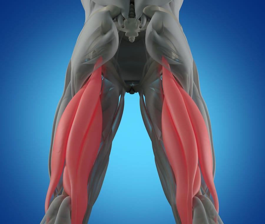 Muscoli Ischiocrurali: Anatomia, Funzione ed Esercizi