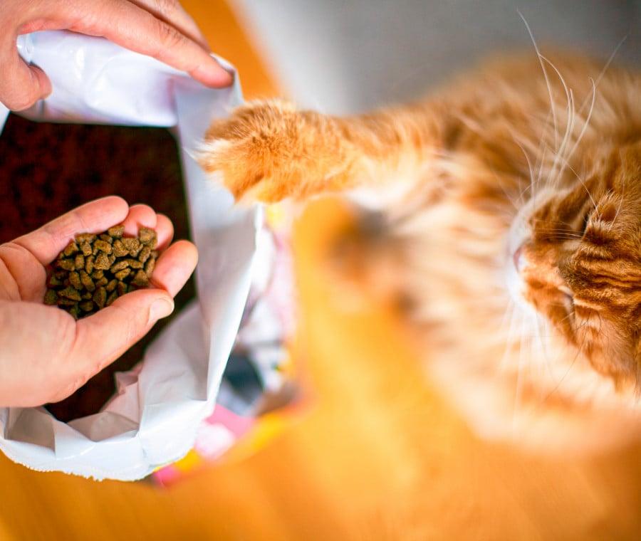 Alimentazione del gatto: scelta dell'alimento e lettura etichetta