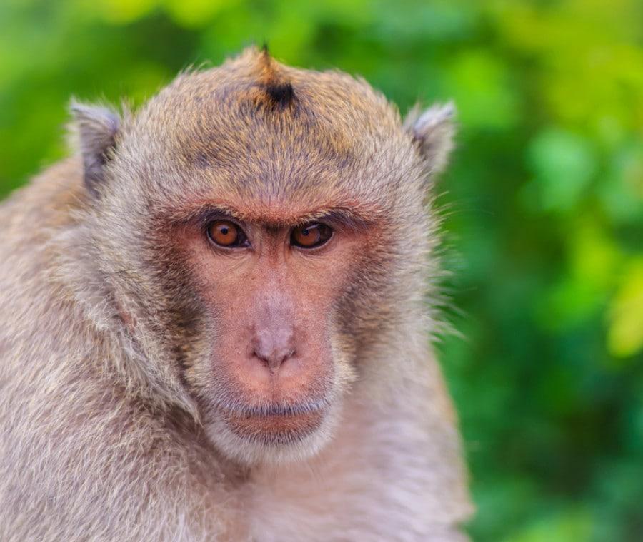Vaiolo delle Scimmie (Monkeypox): Cos'è e Malattia nell'Uomo