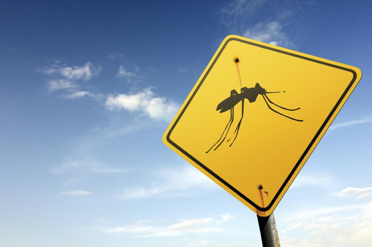 Chikungunya e rischio di infezione nelle zone temperate