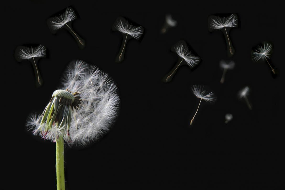 Polline disperso nell'aria