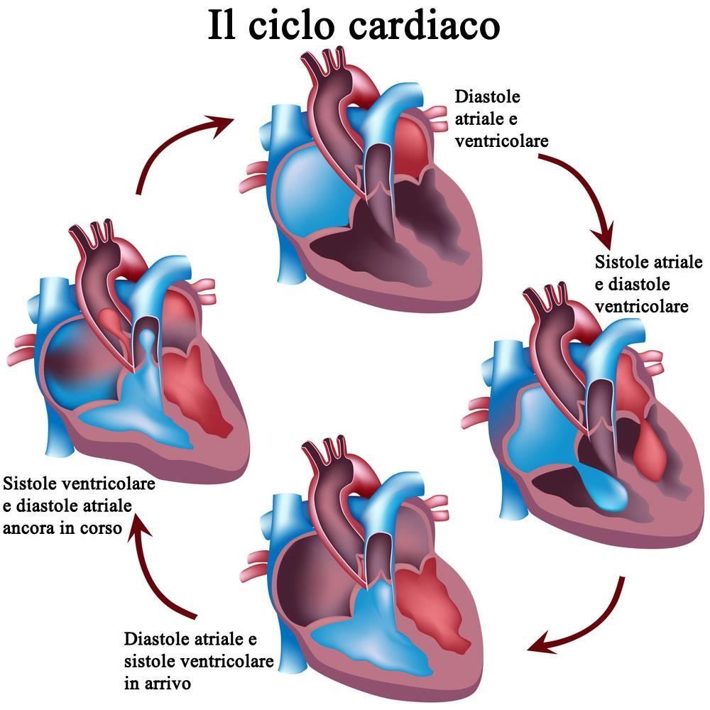 Ciclo cardiaco: sistole e diastole