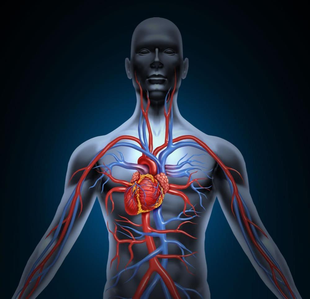Corpo umano con destrocardia