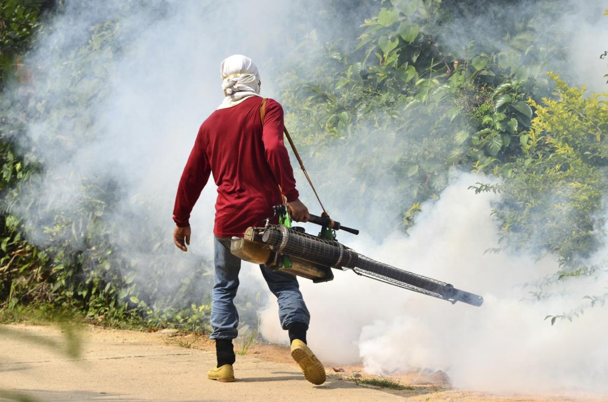 Controllo delle zanzare mediante disinfestazione