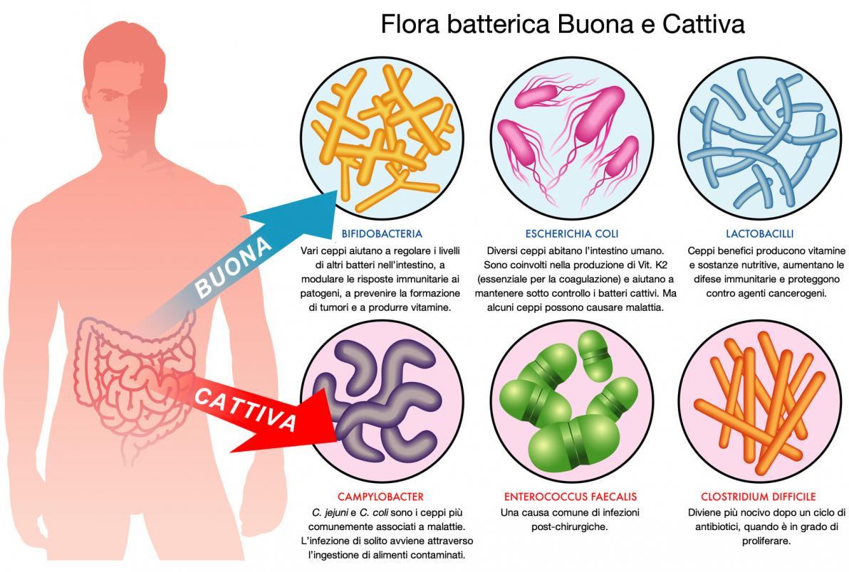Flora Batterica Buona e Cattiva