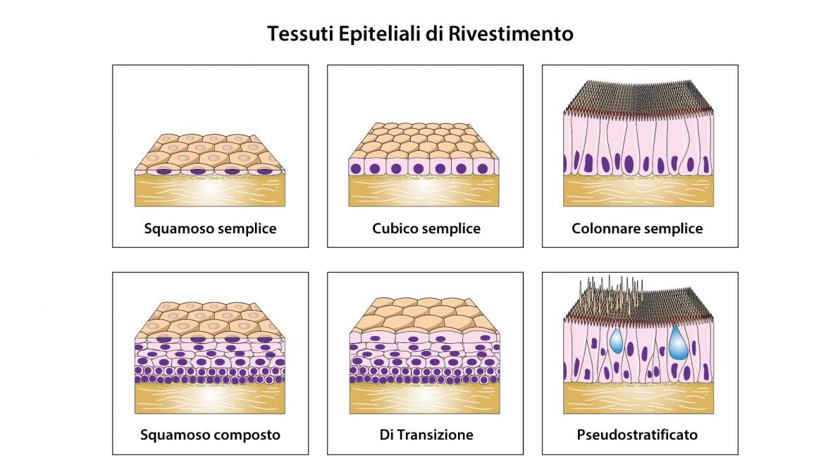 Tessuto epiteliale di rivestimento