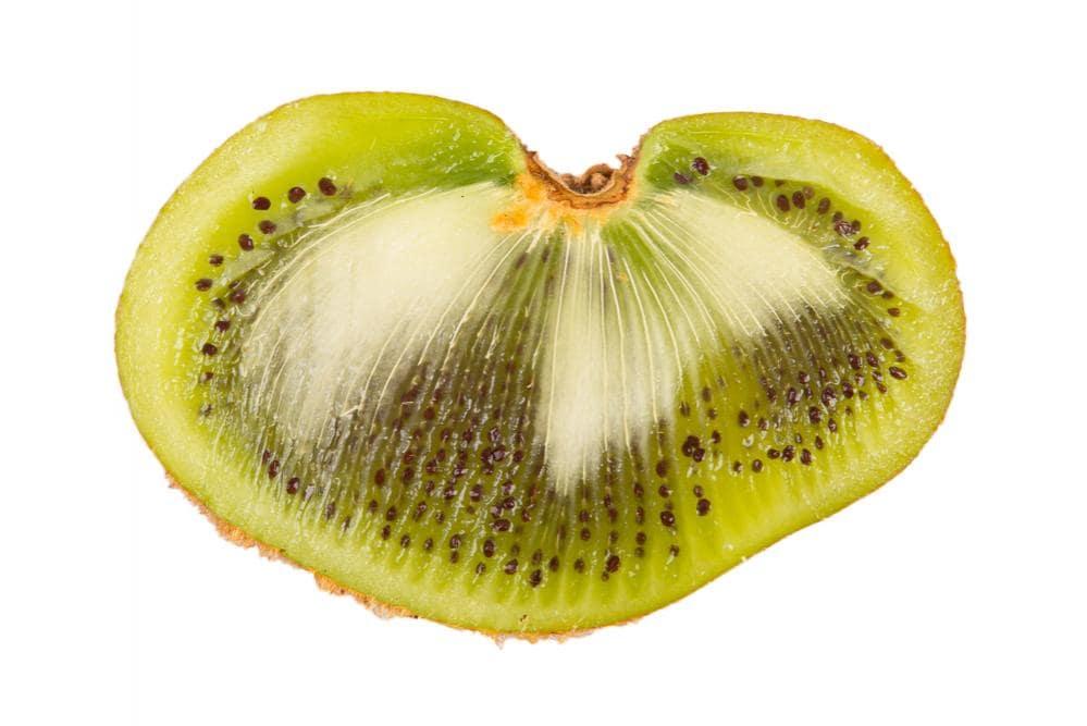 Specie di Kiwi