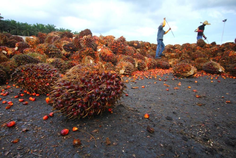 Olio di Palma e Produzione Mondiale