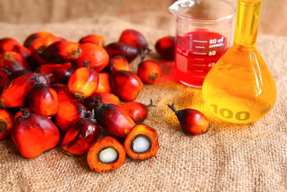 Olio di Palma e Salute